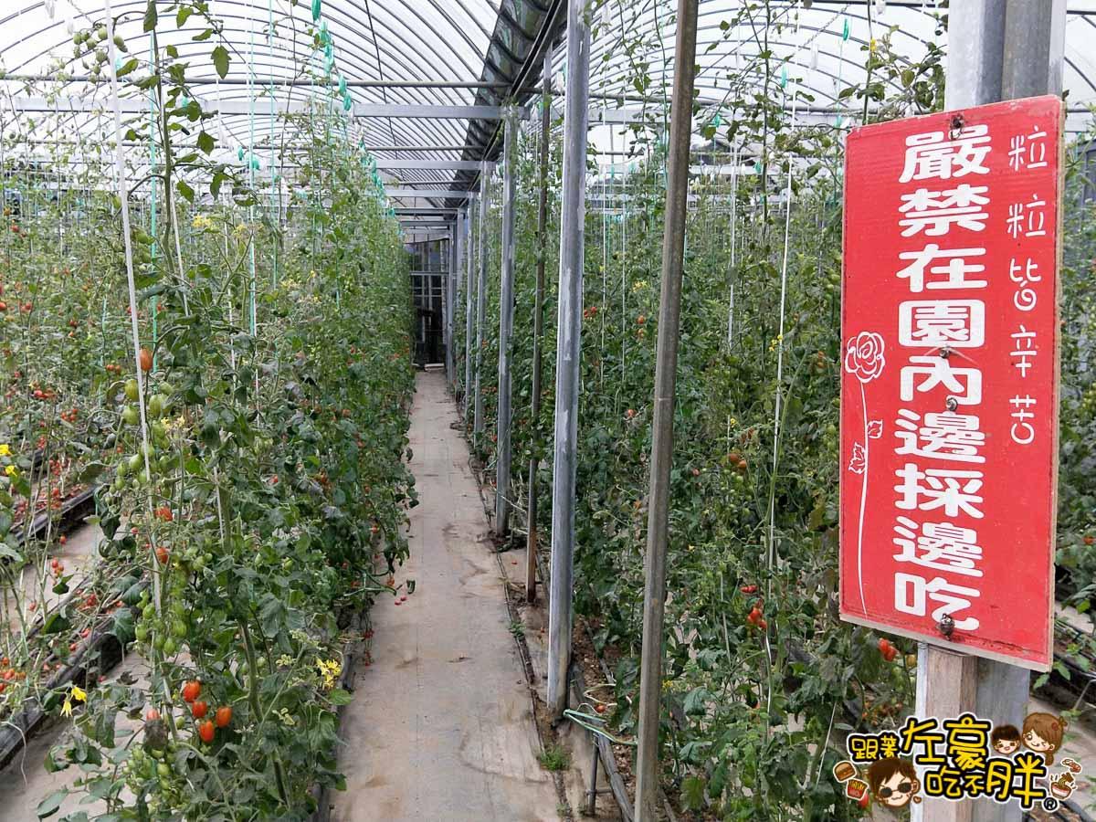 苗栗縣大湖灣潭玫瑰草莓園-21