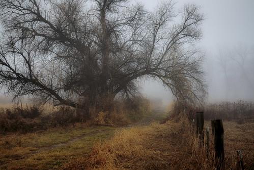fog trees grass fence morning winter