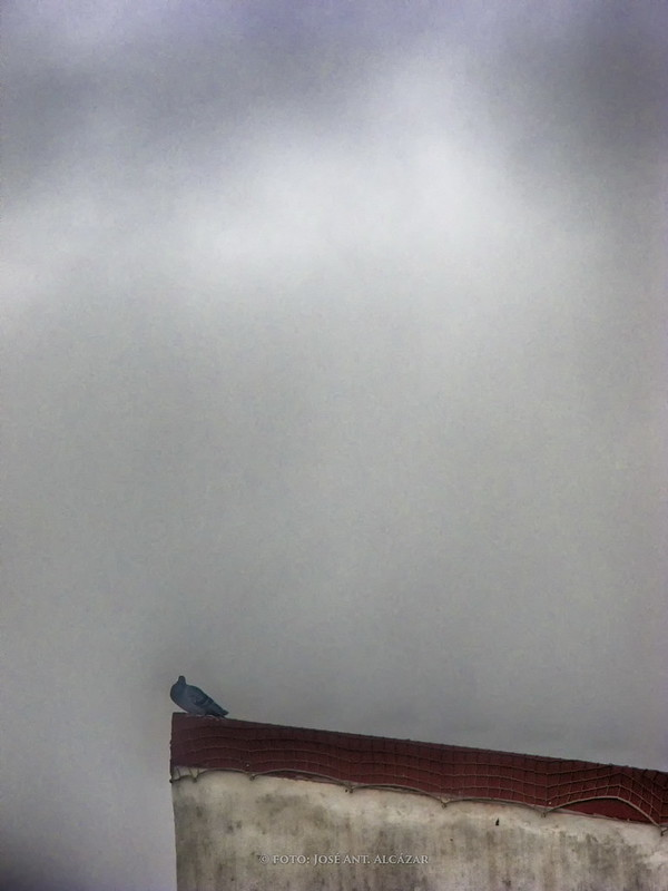 Paloma en el borde de un tejado con un fondo de cielo con niebla