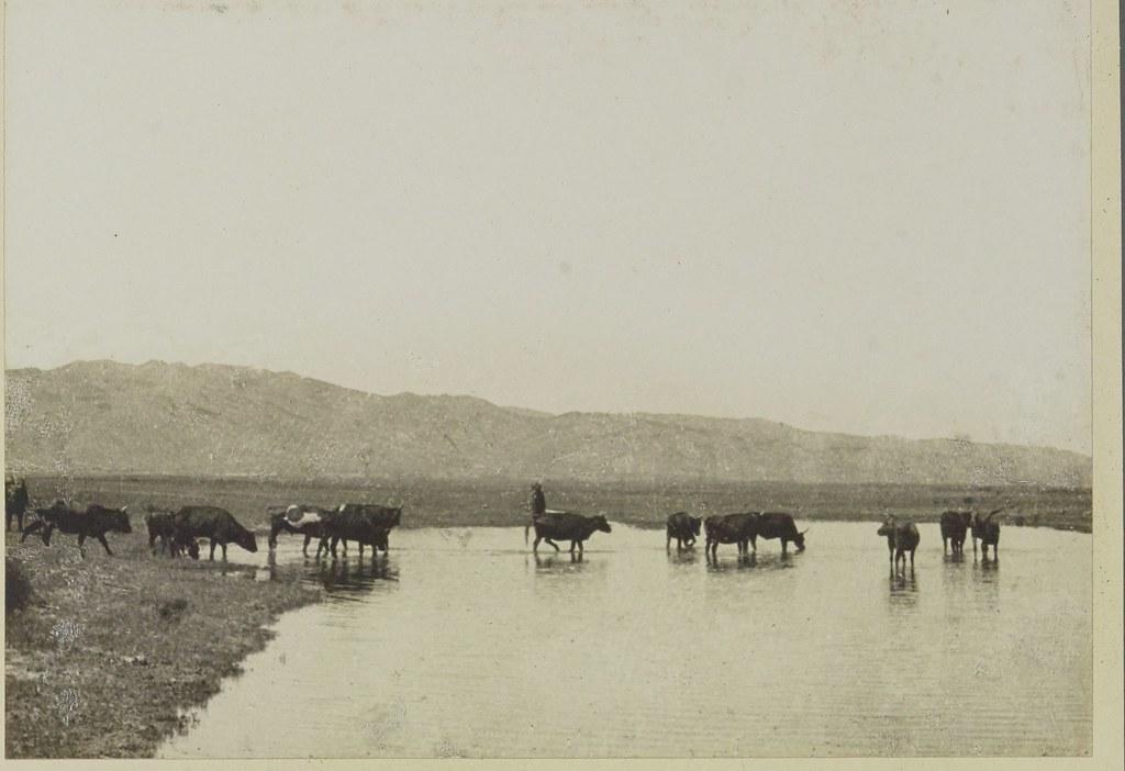 15. Река Тола. 16 июня