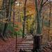 Leete Path Leaves