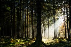 rayon de soleil d'automne