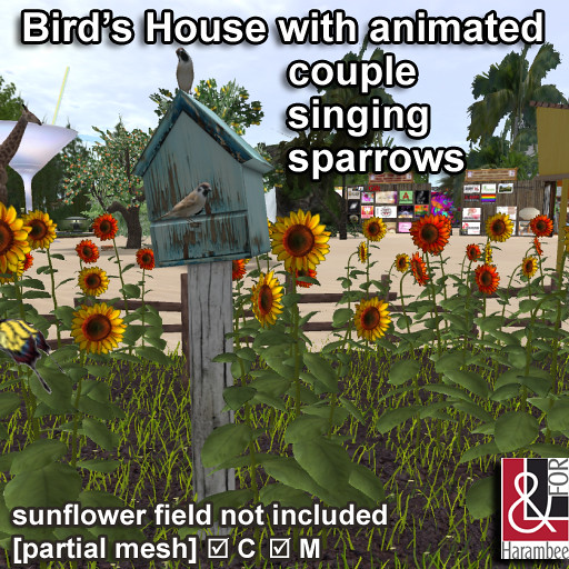 Bird's House with couple singing sparrows - TeleportHub.com Live!
