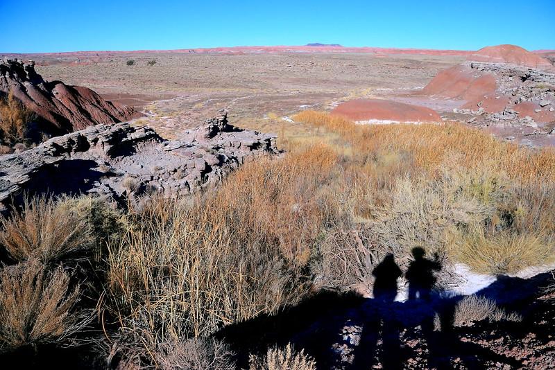 IMG_4843 Vegetation in Painted Desert