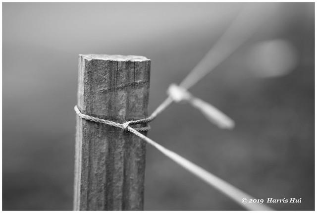 Tied - Calder XT6298e