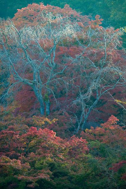 御船山の紅葉, Fujifilm X-T2, XF55-200mmF3.5-4.8 R LM OIS