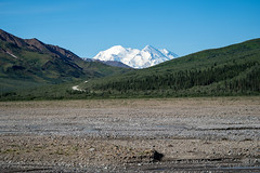 Denali National Park with the mountain in full view on a blue sky clear summer day.