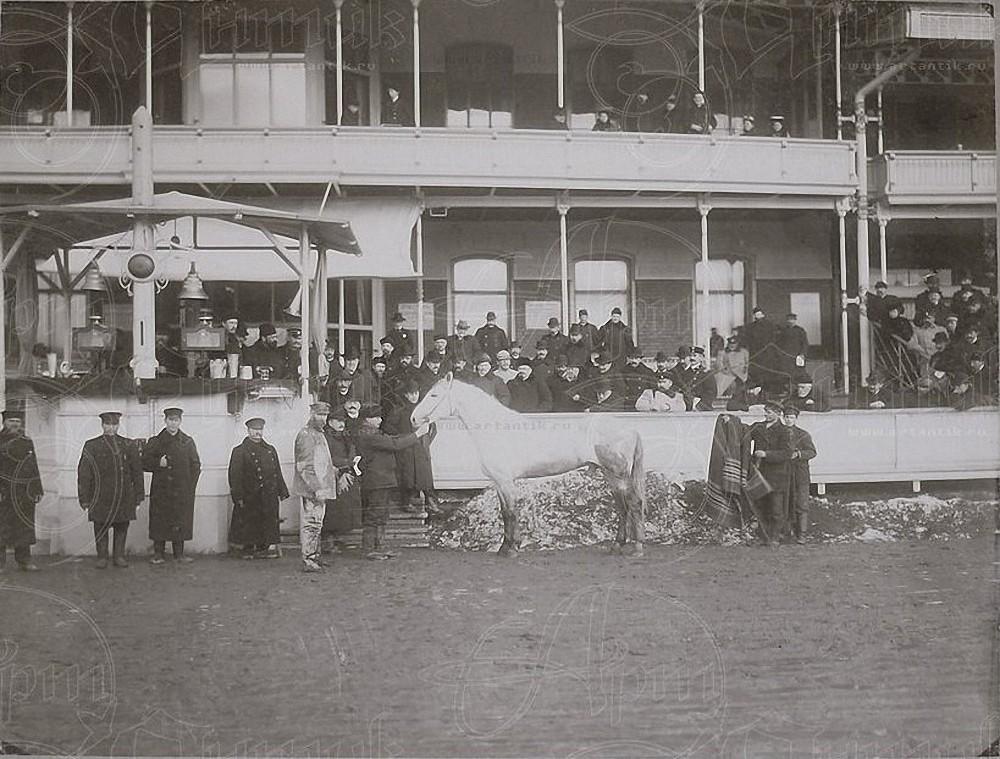 1910. Москва. Ипподром. Лошадь Абсурд