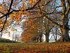 autumnal around Wimborne