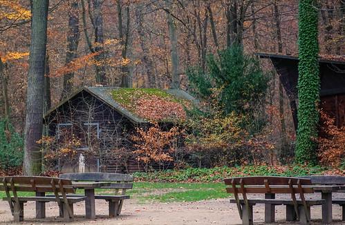 tannenwald 112018