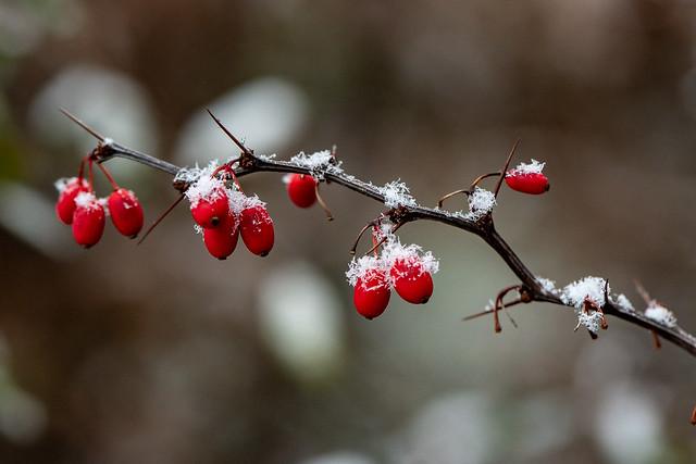 A little bit snow 1320, Nikon D850, AF-S VR Micro-Nikkor 105mm f/2.8G IF-ED