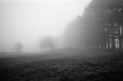 Foggy walk - Photo of Gy-l'Évêque