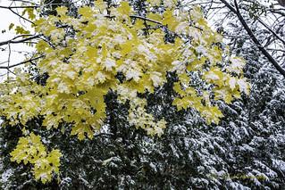 contrasting seasons