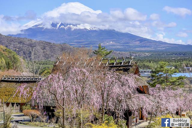 西湖療癒之鄉根場櫻花-31