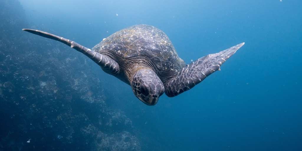 des-mission-explorer-les-profondeurs-des-océans