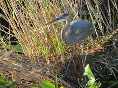20170211 73 Everglades National Park