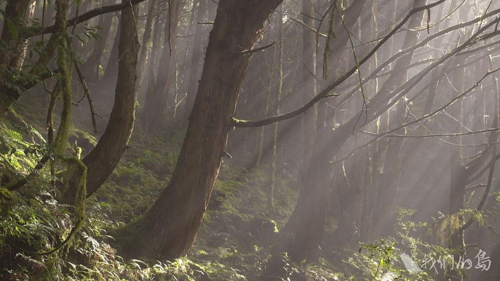 985-1- (32)二十年,對大樹來說很短暫,對台灣的山林來說,卻經歷了許多變化。