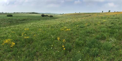 Heidelandschaft, Ostbelgien