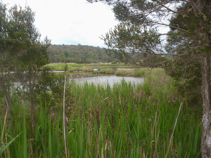 Tamar Island Wetlands Centre