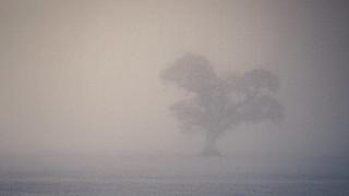Windyedge Tree