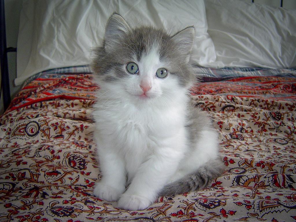 Fotos de animales de todo tipo incluyendo mascotas que más te gustan - Página 13 31376064467_57ca09e598_b