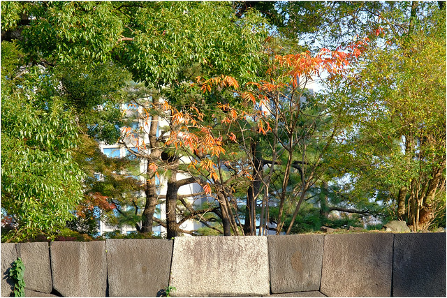Photo:Autumn walls - The East Garden, Tokyo Imperial Palace, Japan By Geoff Whalan