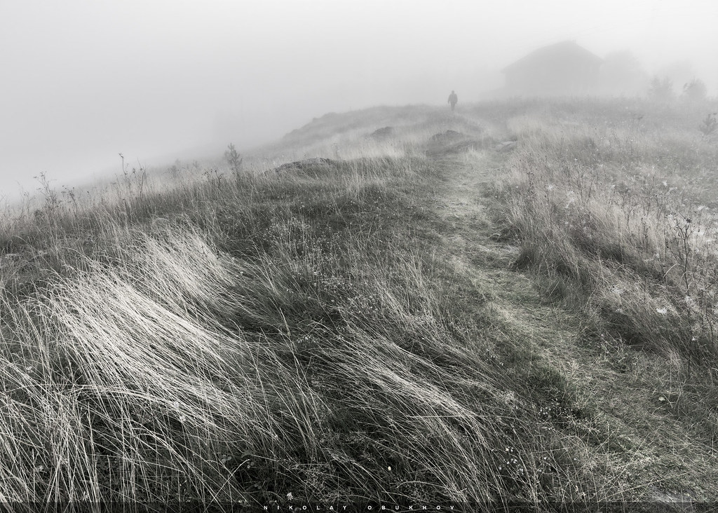 Into the Mist / 0233_0514