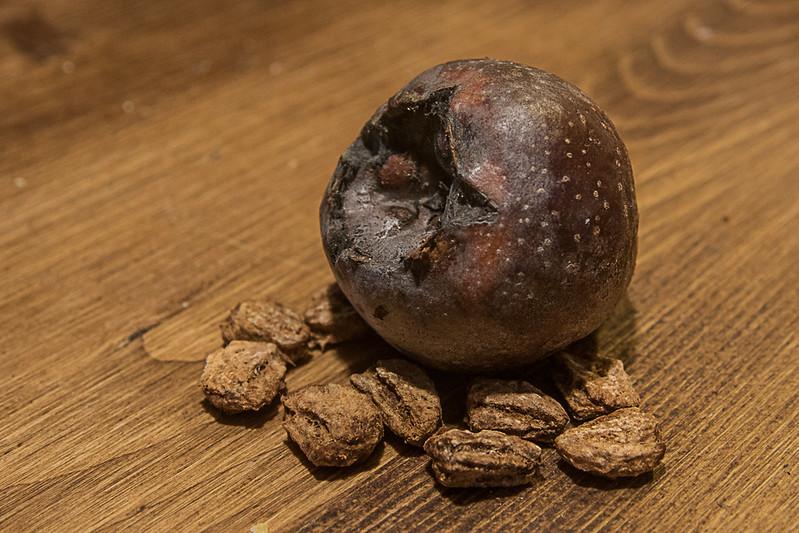 Medlar (Mespilus germanica) fruits & seeds