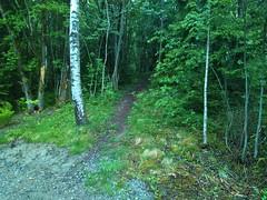 Henstadskogen_20170603_152953