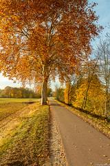 Sortie du côté d'Eckbolsheim, canal de la Bruche