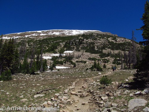 Early on the trail up Bald Mountain, Uinta Mountains, Utah