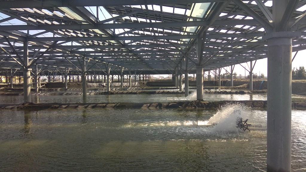 位於台西的文蛤池結合立柱式光電養殖。圖片來源:水試所