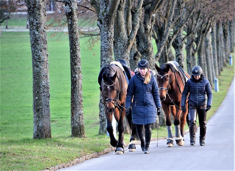Horses 04.01 (6)