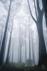 Misty Mt Ellery 3