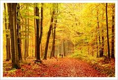 Herbst (autumn)