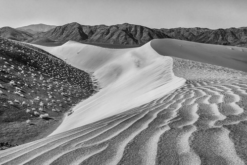Sand Dunes Black and White 2015