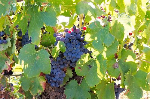 En la viña