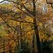 Autumn colours of Burnham-09