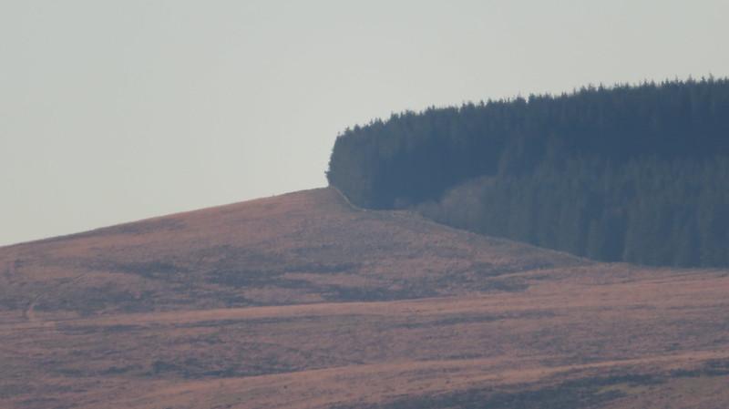 Assycombe Hill