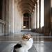 Pomeranian at Louvre Museum