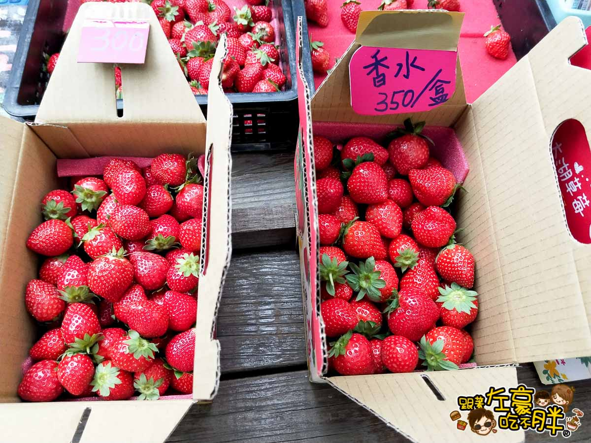 苗栗縣大湖灣潭玫瑰草莓園-10