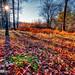 _TGM3353_20181118_1400_Nikon_D500_AuroraHDR2019-edit_Luminar2018-edit.jpg