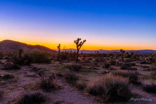 Love at First Light in Mojave