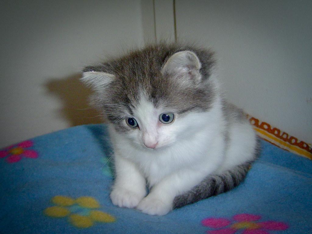 Fotos de animales de todo tipo incluyendo mascotas que más te gustan - Página 13 44498332760_53382622c9_b