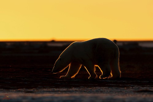 Searching in the Arctic Dusk