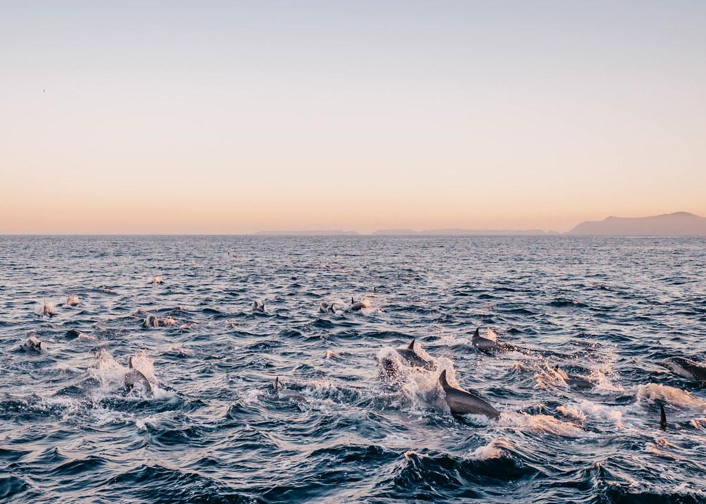 ventura delfiini