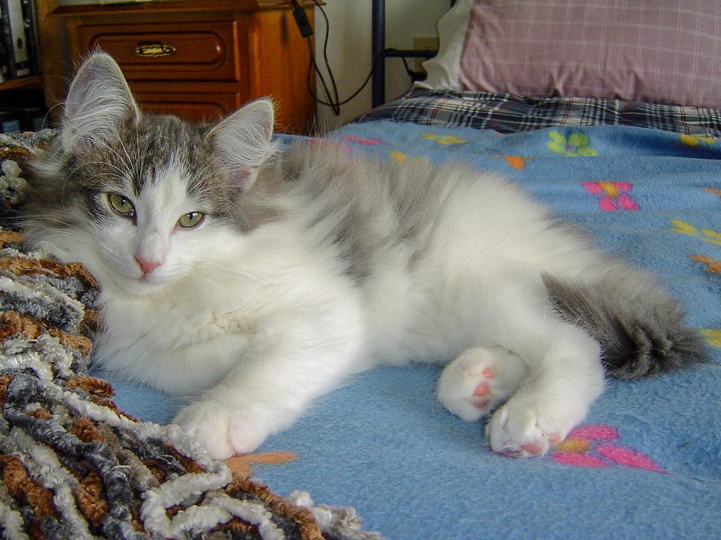 Fotos de animales de todo tipo incluyendo mascotas que más te gustan - Página 13 45591443924_cdfdc1fc44_b