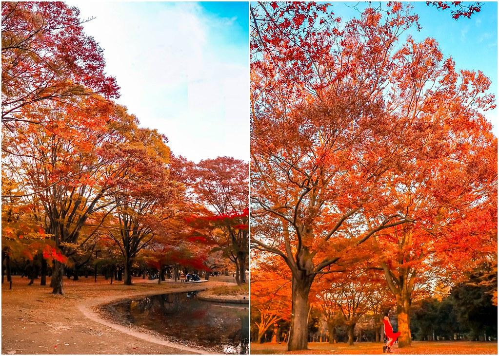 tokyo-yoyogi-park-alexisjetsets