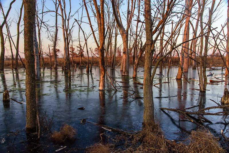Orland Wetland