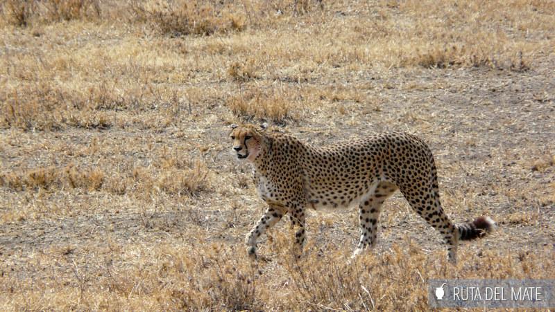 Guia para viajar a Kenia y Tanzania P1140913